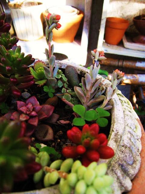 たくさんの可愛い植物